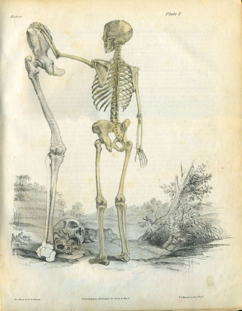 a_series_of_anatomical_plates_bones_plate_02
